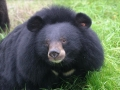 AnimalsAsia_Freedom_3