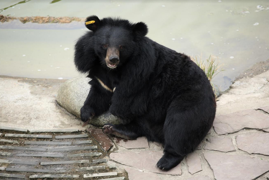 AnimalsAsia_Freedom_4