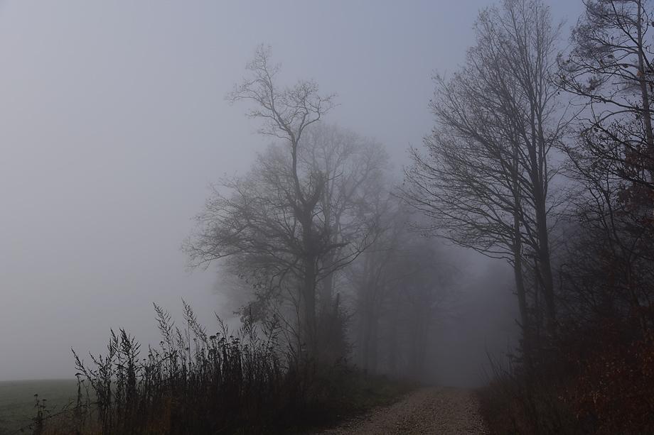 ebrach_rundweg_nummer4-DSC_1195