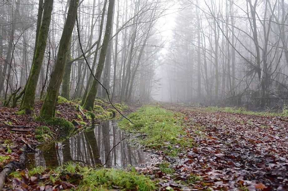 ebrach_rundweg_nummer4-DSC_1201