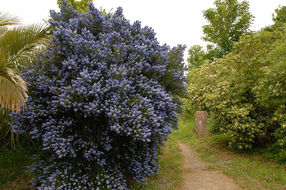 Blühende-Bretagne_DSC_3677