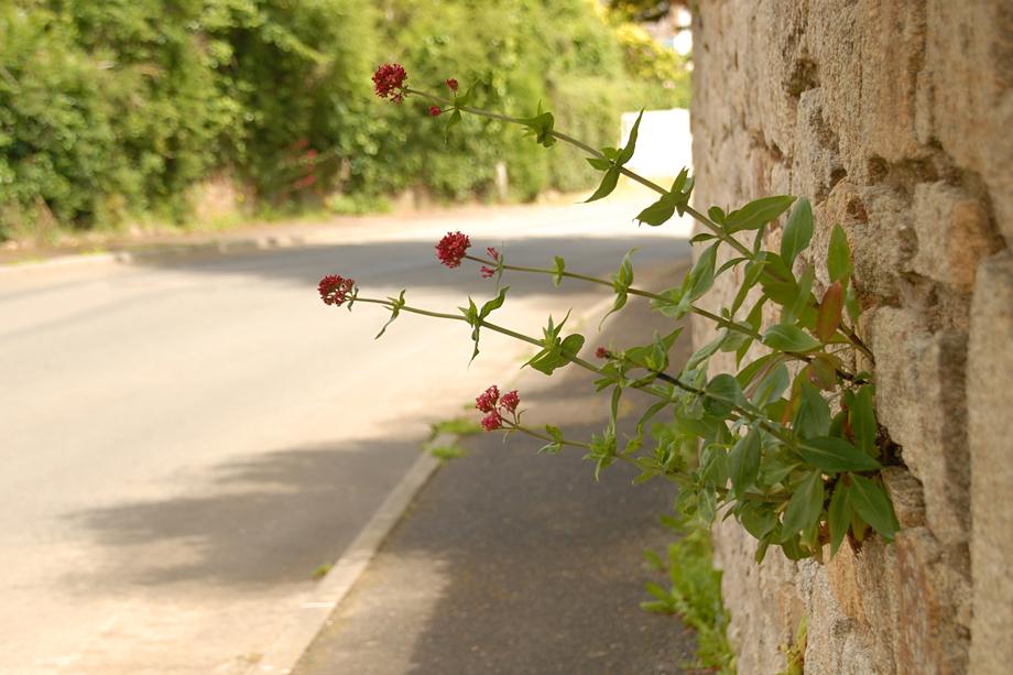 Blühende Bretagne_DSC_4178