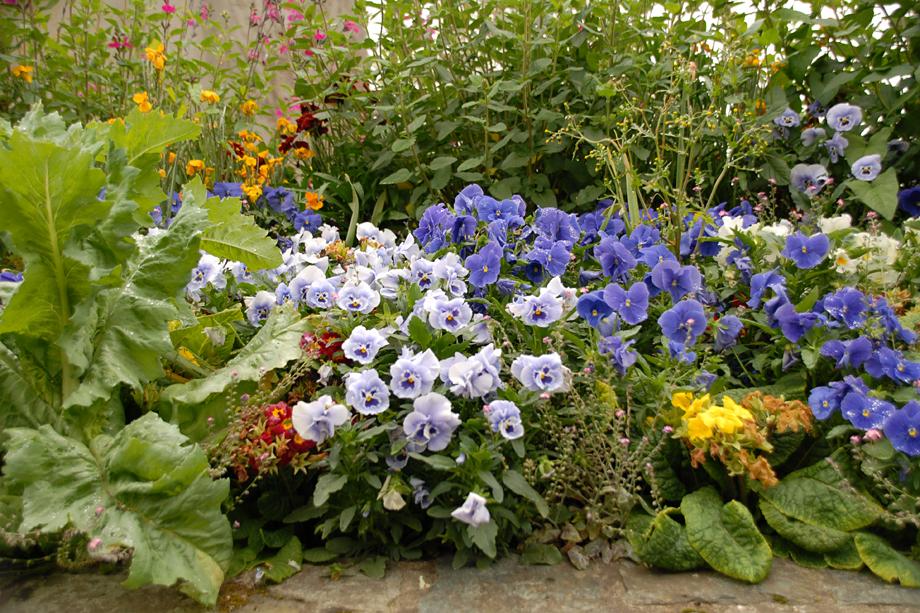 Blühnende-Bretagne_DSC_3664