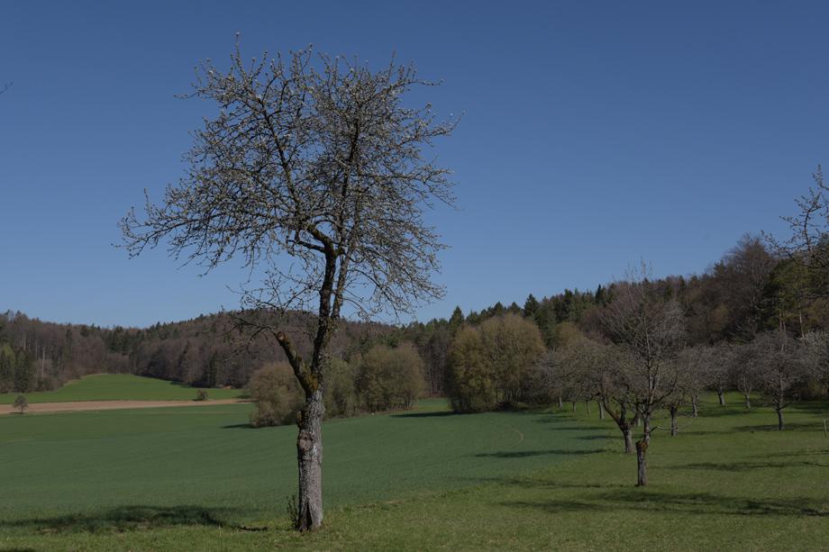 Burg_Hoheneck_DSC_9772